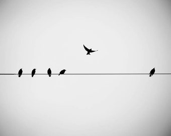 large photography print birds on a wire black and white photography 24x36 fine art photography birds flying modern minimal bedroom decor