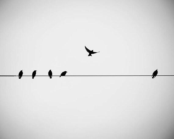 große Fotografie drucken Vögel auf einem Draht schwarz / weiß