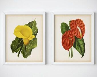 Set of prints, Botanical print set printable, Set of 2 prints, Flowers print set, Printable set of 2, Anthurium, Calla lily 8x10, 11x14, JPG