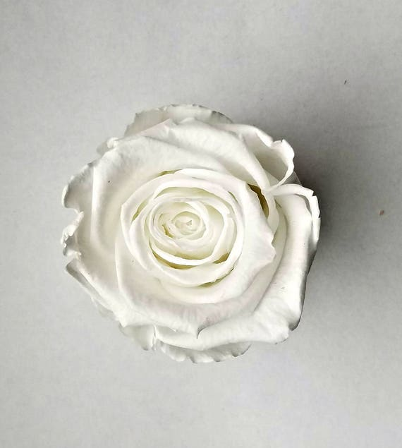 Reserved for Kylee -  preserved rose 9 pack, White rose, rose, Everlasting rose, Forever rose, wedding rose, engagement rose