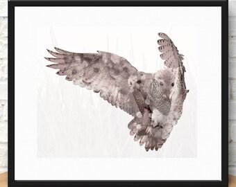 Dreams of a snow owl