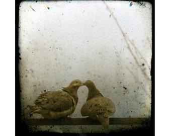 Promises (two love birds kissing) , Fine art photograph, print 8x8