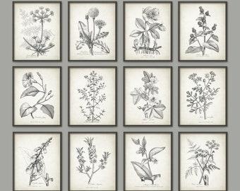 Antique Botanical Print Set of 12, Vintage Botanical Home Decor, Plant Book Plate Illustration, Garden Flowers and Herbs Set of 12 B66