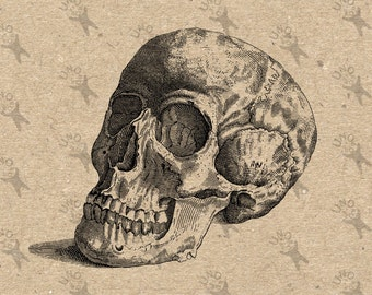 Vintage retro drawing Human Skull Anatomy Halloween image Instant Download Digital printable clipart graphic Burlap Transfer Iron On 300dpi