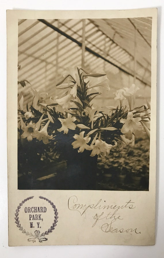 Antique Pre-1907 Real Photo Post Card with Easter Lilies