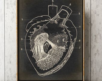 HEART ANATOMY POSTER, heart Chart, Scientific Illustration, Anatomical Drawing, Anatomy Print, Medical Art, Doctor, Surgery Art