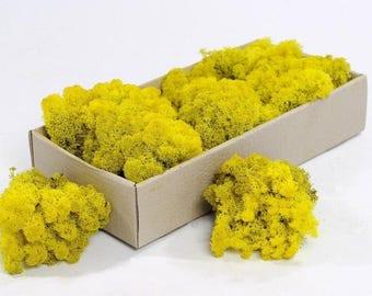 Box of natural icelandic reindeer moss - floral supplies - terranium supplies