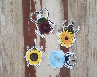 Sticker Pack - Without Wood Flower Beetle Insects - 3in x 3in