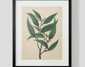 Botanical Print Plate 1337