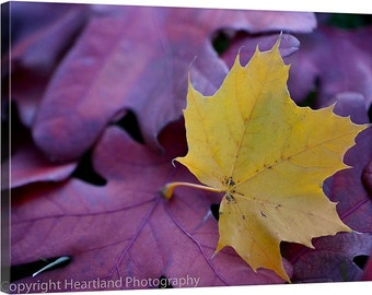 Fall Photography, Leaf Images, Red and Gold, Autumn Leaves, Macro Photography, Canvas Wall Art, 8x10 11x14 16x24, Nature Photo Decor