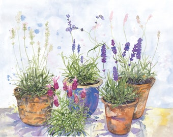 Lavender garden. Limited edition artist signed giclee print on archival paper, A3.
