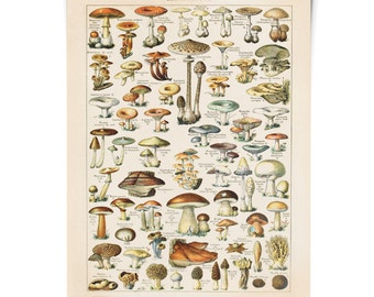 Vintage Botanical Mushroom Diagram Reproduction Poster.  Le Petit Larousse Champignons by Millot. Fungi Educational Chart Diagram. CP239