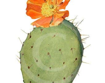 Vintage Clip-Art, Cactus Clip Art, Clip Art Cactus, Cactus Download, Cactus Printable, Cactus Print, Cactus Wall Art, Cactus Prints, Cactus