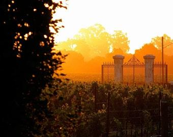 Landscape Photography-Morning Vineyard