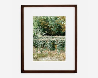 Ivy Wall, Fine Art Photograph, Home Decor