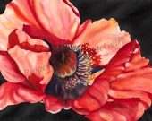 "Watercolor Print ""Red Poppy"" by Sandi McGuire"