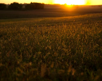 Sunset in the Field | Photo Print