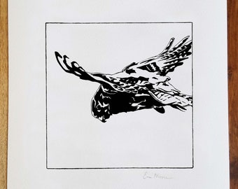 Kestrel Print