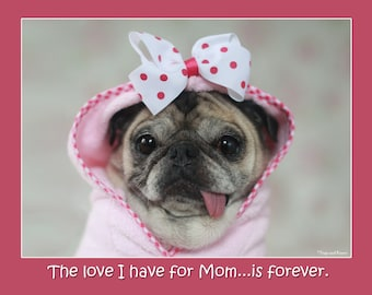 Mother's Day Card - The Love I Have for Mom - 5x7 Pug Card Pugs and Kisses