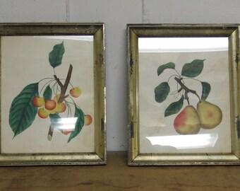 2 Botannical Prints with Lemon Gold Frames