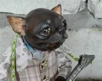 Hot Macho Chihuahua