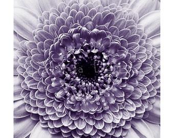 Gerbera Photographic print, Duotoned Gerbera photo print, flower photo print, fine art flower print, gift for gardener, wall art