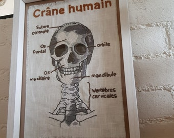 Human skull, embroidered, Anatomy