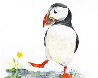 PUFFIN:  Print of a watercolour painting by Jan Taylor