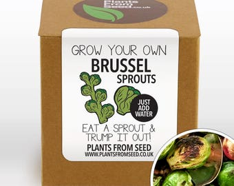 SALE NOW ON!!! - Grow Your Own Brussel Sprouts Plant Kit