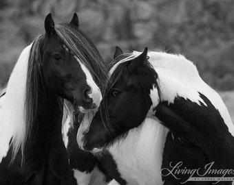Two Gypsy Friends - Fine Art Wild Horse Photograph - Horse - Black and White - Fine Art Print