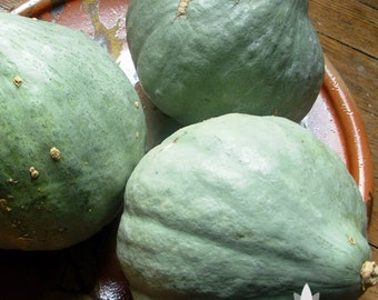 Blue Hubbard Winter Squash Heirloom Seeds - Non-GMO, Open Pollinated, Untreated
