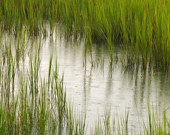 Rain on the Marsh- landscape photograph - nature south southern wetland grasses