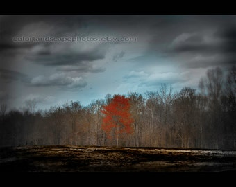 Landscape Photograph - Burned Ground Landscape Red Tree Photograph, Forest - Orange Tree Teal Sky and Clouds Wall Art Color Art Print