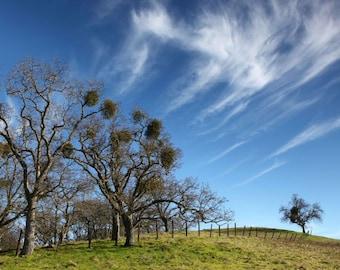 Mt. Diablo California, landscape photography, Oak tree photograph, Bay Area, sunset, green grass, pink, orange yellow, clouds fine art photo