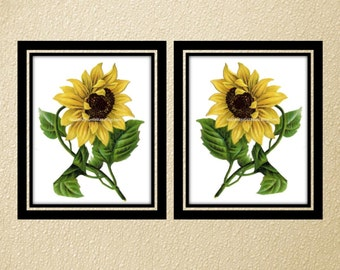 Two Large 5x7 Vintage Flower Prints Yellow Sunflower Instant Large Picture INSTANT DOWNLOAD Digital Botanical Flower Wall Decor Art  8x10
