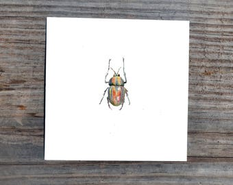Beetle 4 x 4 Square Print