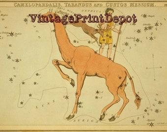 Camelopardalis Wall Art, Camelopardalis, Mythological Vintage Art, Camelopardalis Constellation, Astrology Art, Galaxy Art, Mythological Art