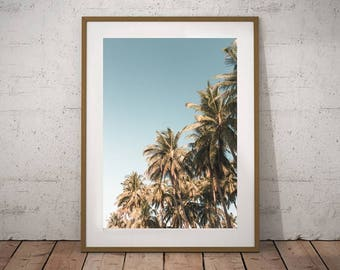 Palm Trees Canvas Wall Art