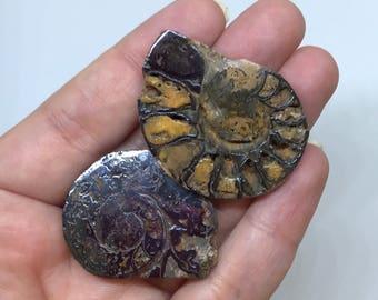 Hematite Ammonite