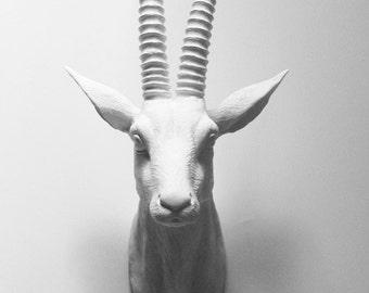 Animal Head, Antelope, Faux Taxidermy, Deer Head, Faux Deer Head, Deer, Faux Taxidermy Australia, African Animal Head, White Antelope Head