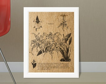 Orchid Illustrations, Digital Download,Botany Drawings, Printable Art, Wall decor, Botany, Download Image For Wall Decoration, Prints
