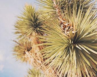 Joshua Tree print, yucca photograph, desert wall art, Joshua Tree photography, living room wall decor, southwestern, minimalist, green, blue