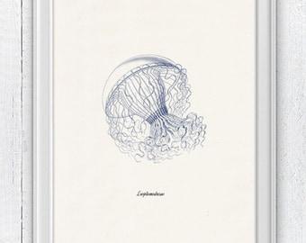 Jellyfish Leptomedusae in blue - Wall decor poster - sea life print SAS135