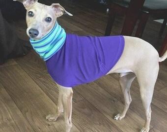 "Italian Greyhound Clothing. ""The Purple Tee"" - Italian Greyhound Sizes."