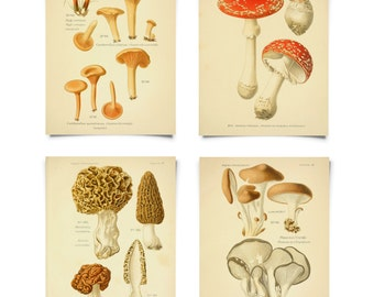 Mushroom Print Set. Botanical Champignons French Fungi Charts Set of 4. Vintage Diagram Kitchen Art Morels Chantrelles Magic Mushrooms CP286