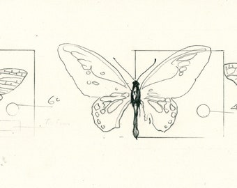 "Original Drawing 'Three Moths' for 'Sabine's Notebook' approx 8"" X 2.5"""
