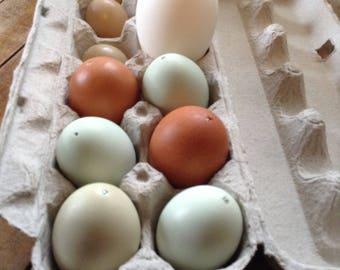 Goose Egg & Assortment Blown Eggs
