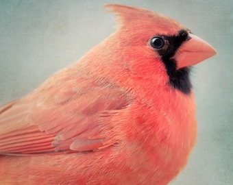 Red Cardinal Bird Print, Bird Art, Animal Art Print, Cardinal Print, Bird Wall Art, Animal Photography, Cardinal Art, Red Cardinal No. 3