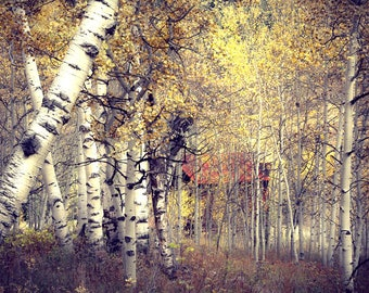 Ghost town photo, aspen trees fall, Colorado art, fall art, rustic western photo, Ashcroft, rustic home decor, log cabin decor | Place