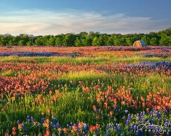 "Wildflower Field Photo | ""Texas Wildflower Field"" | Texas Wall Art | Texas Landscape - TX Bluebonnets and Indian Paintbrushes Home Decor Art"